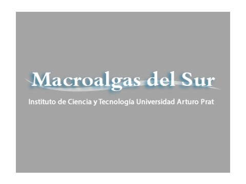 Macro Algas del Sur - WDesign - Diseño Web Profesional